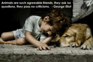 dogs-quotes-5
