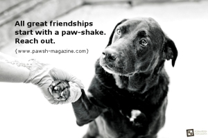 inspirational-dog-quotes-toronto-pet-photographer