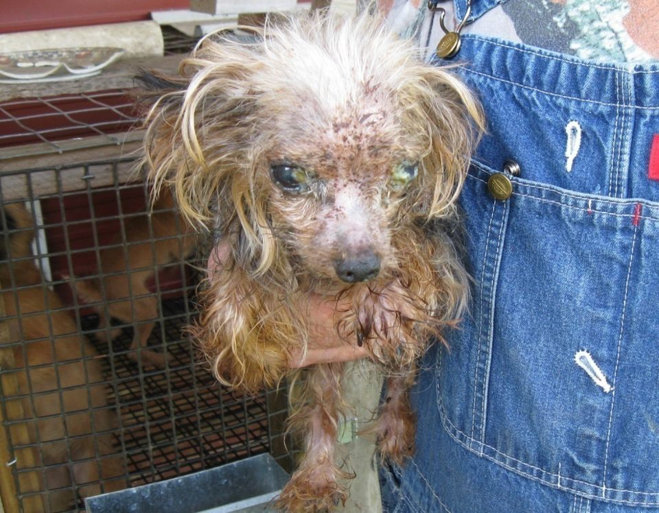 the horrors of puppy mills Horrors of puppy mills introduction on liz bockman loading unsubscribe from liz bockman cancel unsubscribe working subscribe subscribed.