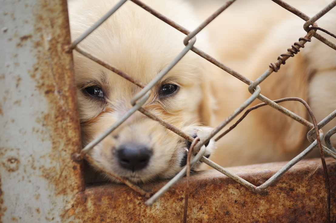 Tips on How to Help Dogs Find Forever Homes,Stop Overpopulation & PuppyMills