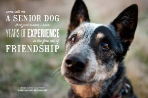 some-call-me-a-senior-dog-that-just-means-i-have-years-of-experience-in-the-fine-art-of-friendship-animal-quote